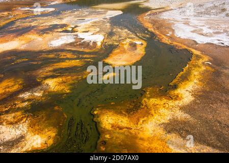 Colchoneta bacteriana, Cuenca del Geyser Superior, Parque Nacional Yellowstone, Wyoming, EE.UU