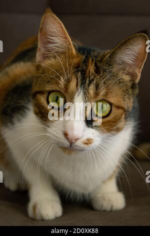 Gatito mirando directamente a la cámara, Green eyed gato mirando a la cámara