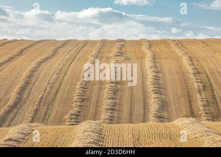 Campo de cultivo/paja después de la recolección en el este de Heslerton cerca de Malton, Yorkshire del Norte en verano (septiembre de 2020) Foto de stock