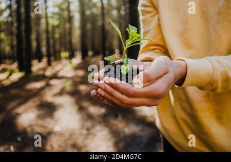 Cerca de manos caucásicas masculinas que sostienen planta en el suelo