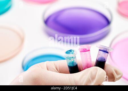 Tubos Eppendorf con líquidos azules, verdes y rosados en la mano del científico sobre el fondo de placas Petri para análisis microquímico.