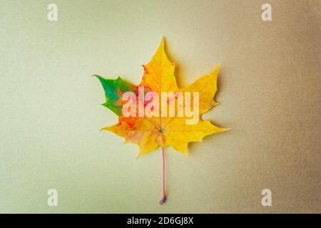 Hoja de otoño sobre un fondo dorado. Plano, vista superior, espacio de copia Foto de stock