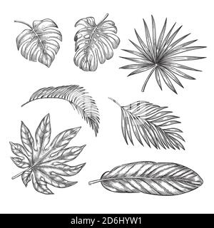Juego de hojas de palma tropical, ilustración de boceto vectorial. Elementos de diseño floral y de naturaleza tropical dibujado a mano.