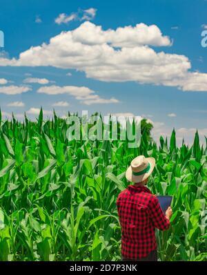 Granjero usando la computadora digital de la tableta en plantación cultivada del campo del maíz. Aplicación de la tecnología moderna en la actividad agrícola creciente. Concepto Imag