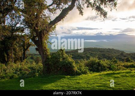 El Área de Conservación de Ngorongoro, es un área protegida y Patrimonio de la Humanidad ubicada a 180 km (110 mi) al oeste de Arusha, en la zona de Crater Highlands de tan