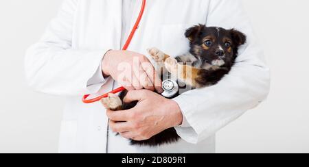 Perro en manos del doctor Vet. El médico veterinario mantiene al cachorro en la mano en un abrigo blanco con estetoscopio. Bebé mascota en el chequeo en la clínica de veterinario. Banner web largo.