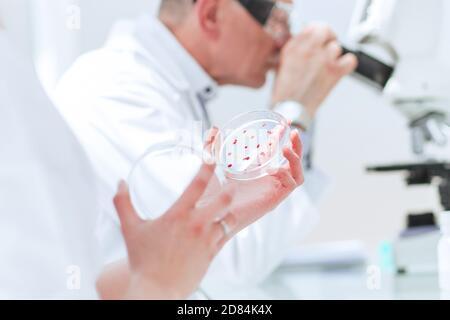 De cerca. Biólogos investigan bacterias en una placa de Petri.
