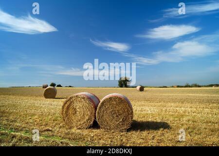 Reino Unido, South Yorkshire, Barnsley, Drum hay Bales in Field cerca de Silkstone Common