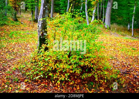 Bosque de otoño en el valle de Elz