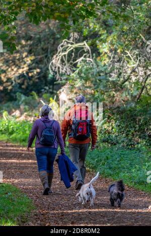 una pareja con ropa al aire libre caminando dos perros en el bosque otoñal siguiendo una pista a través del bosque con animales. Foto de stock