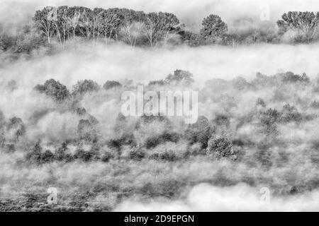 Paisaje otoñal con niebla, fotografía en blanco y negro