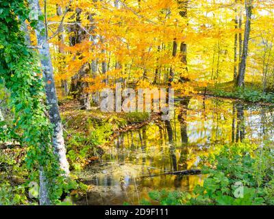 Parque nacional Plitvice lagos bosque virgen virginal, Croacia