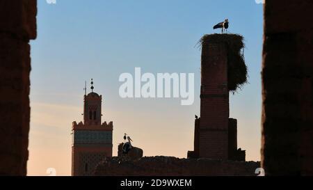 Aves de cerdo y nidos en la parte superior de las antiguas construcciones de loam en el histórico Palacio el Badi en la Medina de Marrakech, Marruecos, con torre de minarete musulmán.