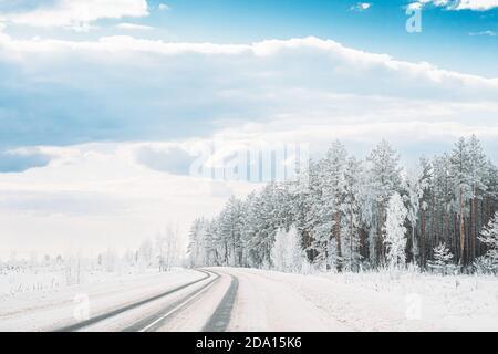 Bosque de pinos cubierto de nieve cerca de la carretera del campo. Los árboles escarchados Frozen Trunks Woods en invierno Snowy Coniferous Forest paisaje cerca de Country Road