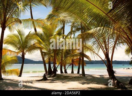 Playa virgen, exótica con palmeras y arena blanca en Isla Ranchería, Parque Nacional de Coiba. Panamá, Centroamérica