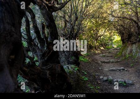 Ruta de senderismo en el Parque Nacional Gomera Garajonay