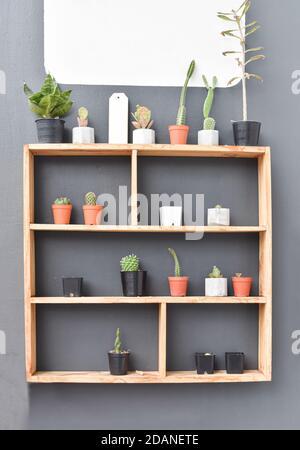 Cactus y suculentos en estante de madera. Planta de cactus pequeña en maceta Foto de stock
