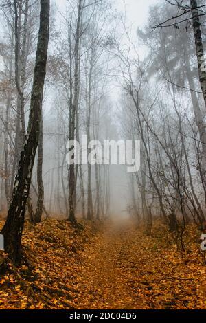 Camino escenografía en un bosque temible y brumoso. Paisaje colorido con bosque niebla, follaje de naranja en otoño. Bosque de hadas en otoño. Bosques de otoño. Árboles encantados.