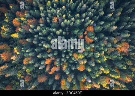Vista superior del zumbido de antena. Amarillo, naranja y rojo de árboles en otoño colorido bosque. Día soleado en otoño de montañas