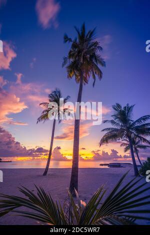 Palmeras de coco en la playa de arena en la isla tropical. Arte hermoso amanecer sobre la playa tropical, paisaje paradisíaco, destino romántico de verano