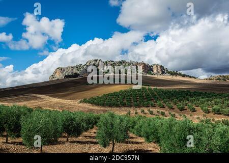 Paisaje de una hermosa colina rocosa con olivos, nubes y cielo azul.