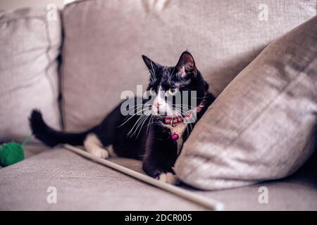 Gato negro en el sofá