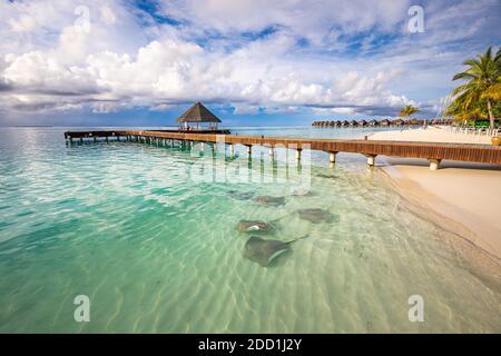Fantástico paisaje de playa con rayas y tiburones en la laguna azul verde en el lujoso hotel resort de la isla, Maldivas vida salvaje playa. Paraíso tropical