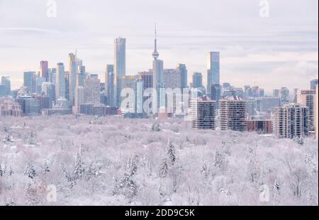 Toronto invierno horizonte con el centro de la ciudad y edificios de rascacielos, nieve y escarcha en el dosel de árboles en primer plano.