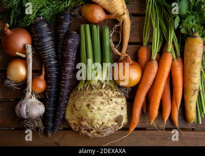 Assortment of colorful root vegetables fresh from the farmer's market including Onions, Garlic, Orange, yellow & Purple Carrots & Celery on wood.