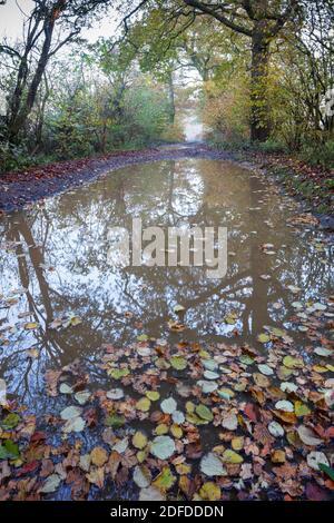 Pista de campo con registro de agua en la mañana de otoño brumoso con hojas flotando en la superficie del agua, Highclere, Hampshire, Reino Unido
