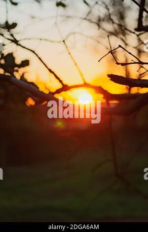 Sol a través de las ramas en la granja. Concepto imagen de la puesta de sol del campo.