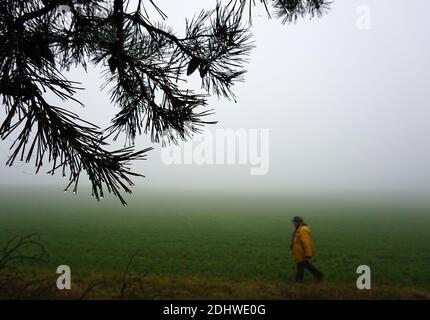 Ancianos solitarios hiker en la niebla. En primer plano una rama de abeto. En el fondo un viajero en el prado polvoriento en busca de soledad. Una pared de niebla