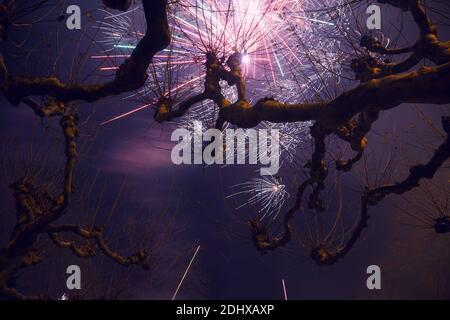 Plátanos con fondo de cielo púrpura y fuegos artificiales en la víspera de año Nuevo en Düsseldorf, Alemania.