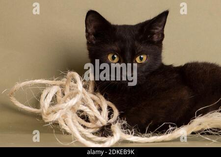 perro, gato de la casa, shortair, halloween, gato negro, gato blanco, mascota, animal, gatito, gato doméstico, gato, lindo, divertido, gatito, felino, doméstico, fondo,