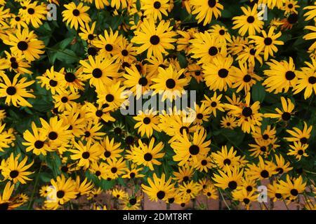 Disparo de fotograma completo de planta con flores de color amarillo