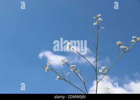 Ángulo de visión baja de floración de plantas contra el cielo azul