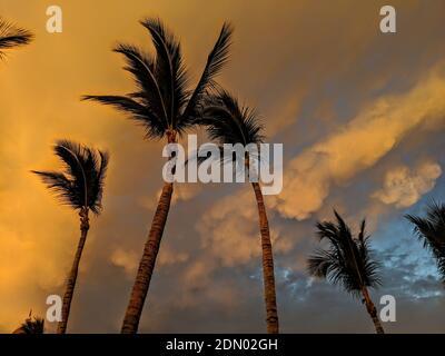 Ángulo de visión baja de Palmeras contra el cielo durante la puesta de sol