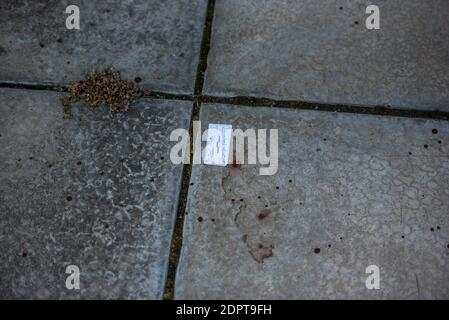 """Melbourne, Australia. 19 de diciembre de 2020. Quedan marcas de sangre en la carretera de ladrillo en un callejón cerca del famoso lugar nocturno.SE encontró A un hombre con graves lesiones en las manos y después de una investigación policial se encontró que era un """"incidente médico"""" donde las lesiones eran informes de la policía autoinfligidos. Crédito: SOPA Images Limited/Alamy Live News"""