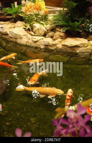 Pez dorado en un pequeño estanque interior