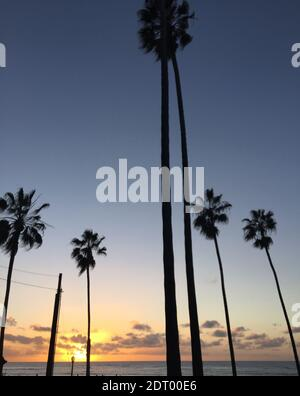 Silueta de Palmeras contra el cielo durante la puesta de sol