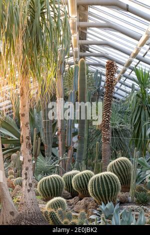 Invernadero con varios cactus, tallo largo y suculentos frondosos y plantas exóticas en un día soleado, suave enfoque