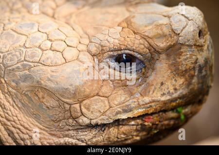 Imagen de primer plano de la cara de tortuga. Foto de alta calidad.
