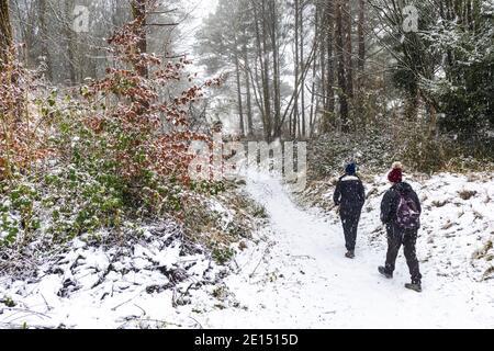 Gente disfrutando de un paseo durante la caída de nieve en un bosque de Cotswold en Painswick Beacon, Gloucestershire, Reino Unido
