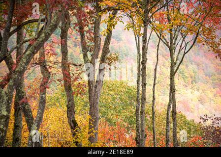 Hermosa vista escénica de la montaña del follaje de otoño en Sapphire Valley, Carolina del Norte, cerca de Cashiers. (EE.UU.)
