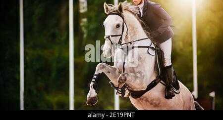 Un caballo deportivo gris con un jinete en la silla de montar en una competición de salto en verano en un día soleado. Paseos a caballo. Deportes ecuestres.