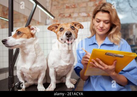 Lindo feliz gato sano russel terrier perro mirando a la cámara después de un examen médico en la clínica veterinaria, mujer veterinario haciendo notas en su portapapeles