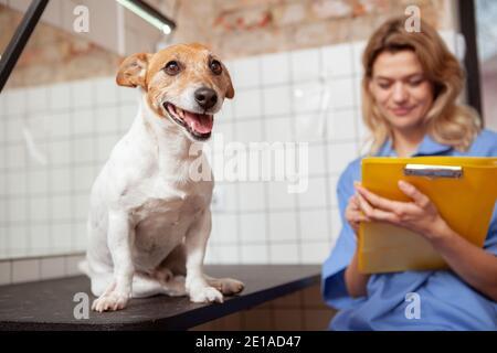 Feliz gato sano russel terrier perro sentado relajado en la mesa de examen médico, veterinaria femenina haciendo notas en su portapapeles