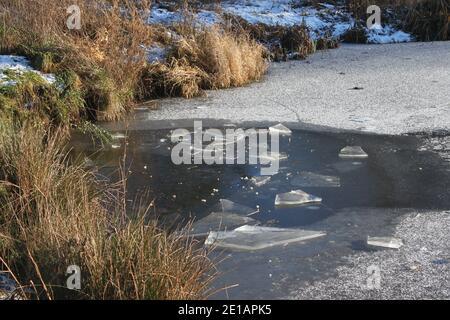 Hielo roto en el lago parcialmente congelado. Seguridad del lago congelado en el invierno. Hermoso paisaje de parque de invierno. Cañas por la orilla del lago congelado. Invierno escocés.
