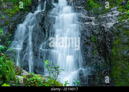 Arroyo del bosque en la selva tropical. Cascada entre rocas y verdor. Río de montaña en el día de verano. Paisaje natural con cascadas de arroyo de montaña