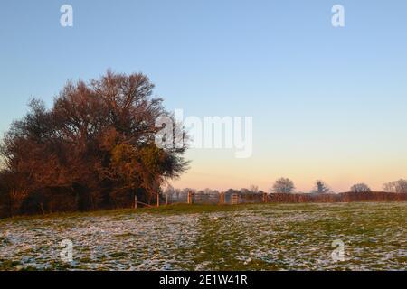 Fackenden Down, en Kent, cerca de Sevenoaks, en nieve y heladas en enero de 2021 a última hora de la tarde. Árboles helados, vistas brumosas, ramas escarchadas, carretera helada